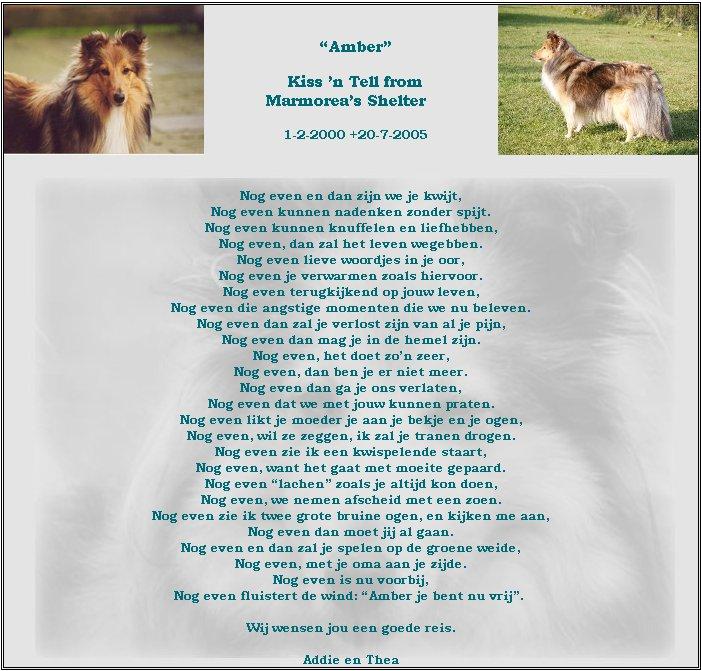 in-memoriam-amber-20-07-2005